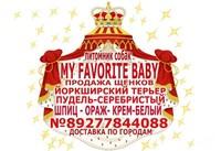 йорки в Тольятти