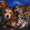 Домашние и дикие животные !