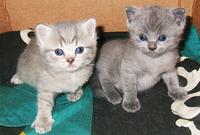 Киссики и Котята